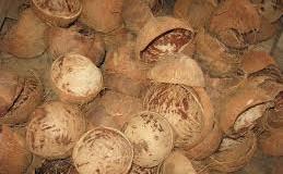Batok kelapa